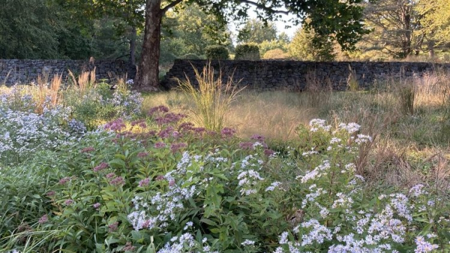 Lasting Landscapes by Carol