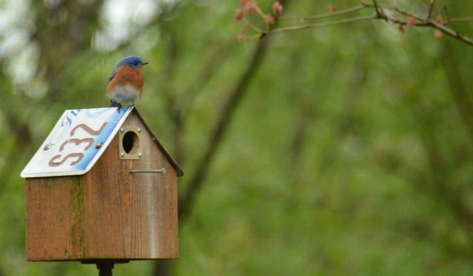 blue bird on house lasting landscapes by carol