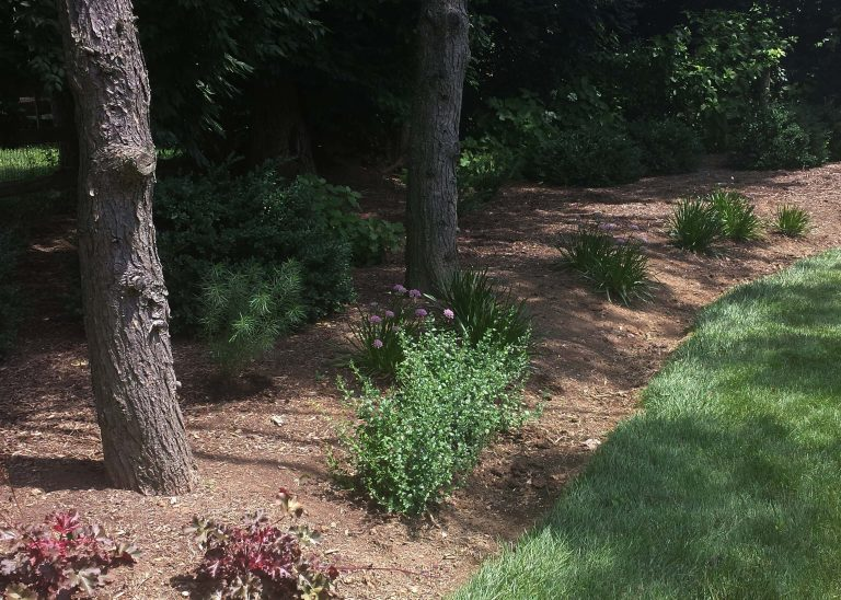 Lasting Landscapes by Carol before and after