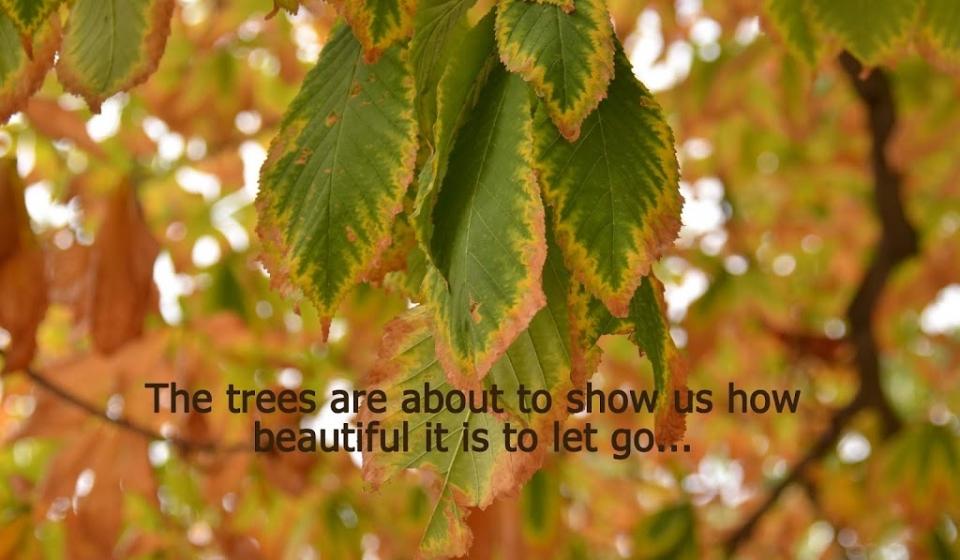 trees-2Blet-2Bgo.jpg