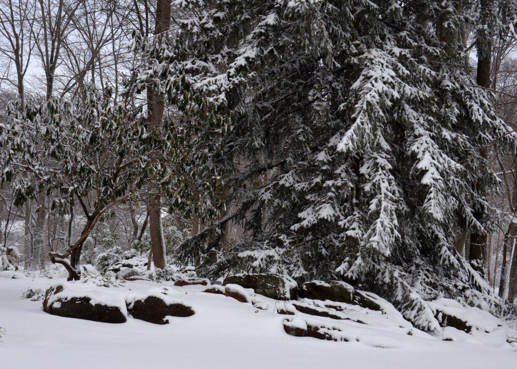Lasting Landscapes by Carol Portfolio